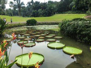 national orchid garden singapore plants